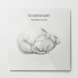 The European Rabbit (Oryctolagus cuniculus) Metal Print