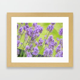 I'm Laven this Weather Framed Art Print