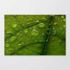 Green Bubbles 2 Canvas Print
