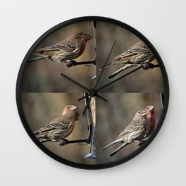 House Finches Dating Wall Clock