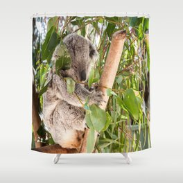 Australia's 'Native Bear', Koala, Australia Shower Curtain