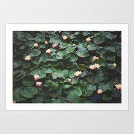 Echo Park Waterlillies Art Print