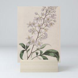 Flower 969 solanum seaforthianum Lord Seaforth s Solanum13 Mini Art Print