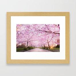 Pink Road Framed Art Print
