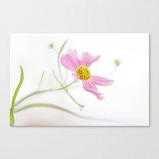 Coreopsis Rosea Canvas Print