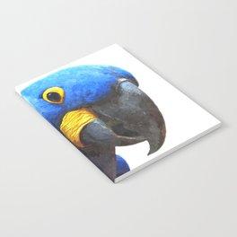Blue Parrot Portrait Notebook