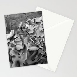 Oxyelea elegans Habitat  Stationery Cards
