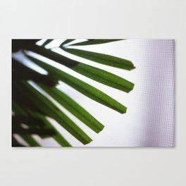 A Present Canvas Print