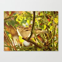 sparrow Canvas Prints featuring Sparrow by Judy Palkimas