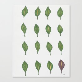 Leaves that are Green Canvas Print
