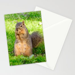Photogenic Squirrel Stationery Cards