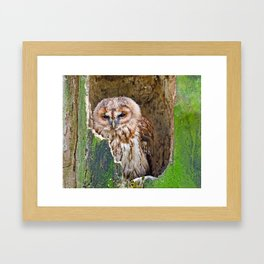 Tawny Owl Framed Art Print