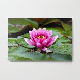 Lotus Flower Metal Print
