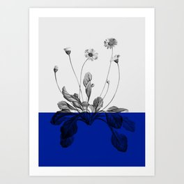 blue flower plant nature Art Print
