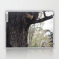 Oak tree Laptop & iPad Skin