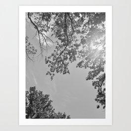 Contemplating the skies Art Print