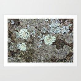 Lichen on granite Art Print