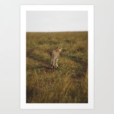 Cheetah Trail Art Print