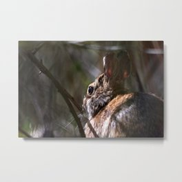 Sunshine Rabbit Metal Print