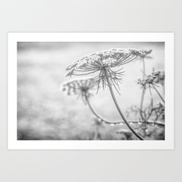 Queen Anne's Lace in Black and White Art Print