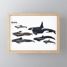 Blackfish Framed Mini Art Print