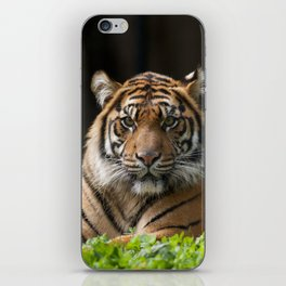 Look into my eyes by Teresa Thompson iPhone Skin