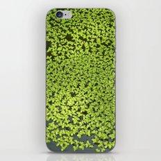 little water leafs II iPhone & iPod Skin