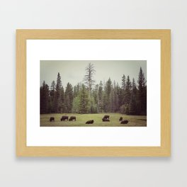 Grand Canyon Buffalo Framed Art Print
