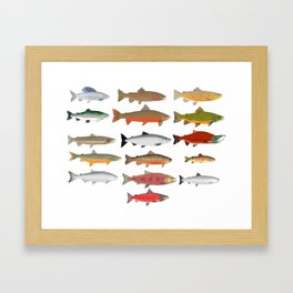 Trout, Char and Salmon Group Framed Art Print