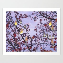 cedar waxwings and berries Art Print