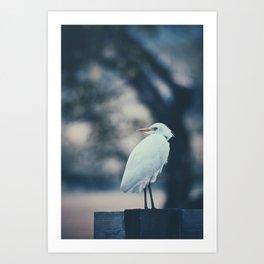 Hawaii Heron Art Print