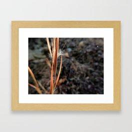 Crystallized Wish Framed Art Print