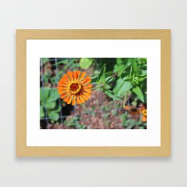 Flower No 5 Framed Art Print