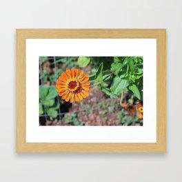 Flower No 5 Framed Art Print