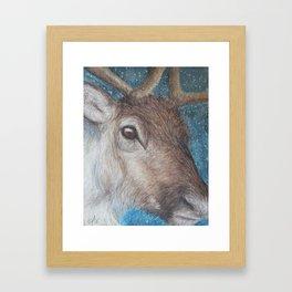 Reindeer (Rangifer tarandus) Framed Art Print