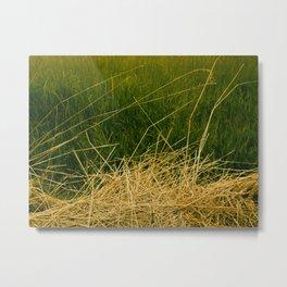 Grasses. Metal Print