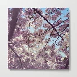 Cherry Blossoms - Washington DC Metal Print