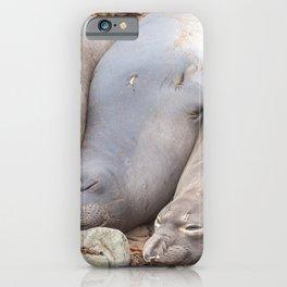 Sleeping Seals iPhone Case