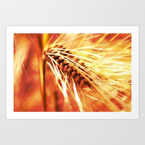wheatfield Art Print