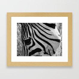 In the eye of the Zebra Framed Art Print