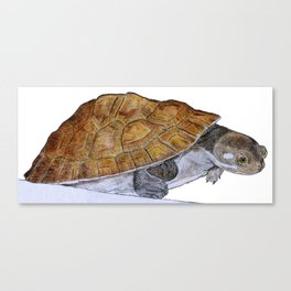 Happy Little Turtle Canvas Print