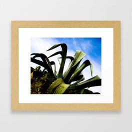 Large Giant Green Aloe Plant with Bright Blue Sky Framed Art Print