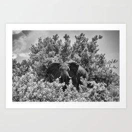 B&W Elephant (Chobe National Park) Art Print