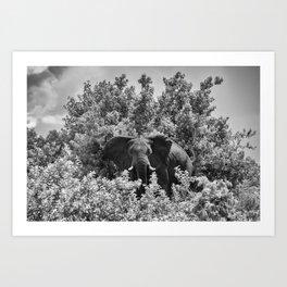 B&W Elephant (Chobe National Park) Art Print