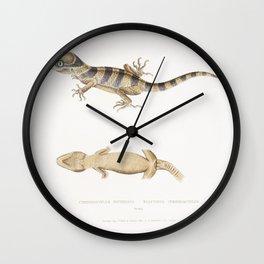 1 Finless Ramcarata (Apterygia Ramacarata) 2 Chapra Shad (Alosa Chapra) 3 Dr Hamiltons Long Jawed He Wall Clock