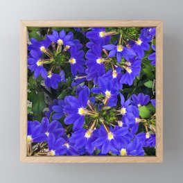Blue-Purple Firecracker Explosion of Flowers Framed Mini Art Print
