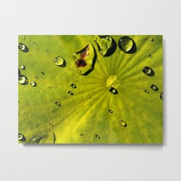 Lily with Water Drops Metal Print