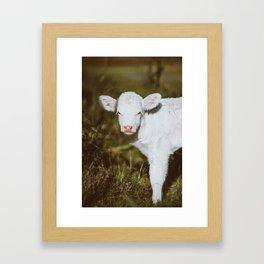 White Calf (Color) Framed Art Print