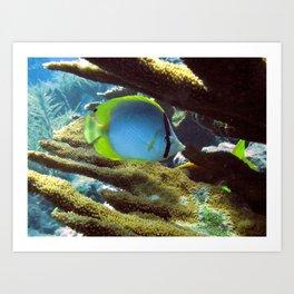 Spotfin Butterflyfish Art Print