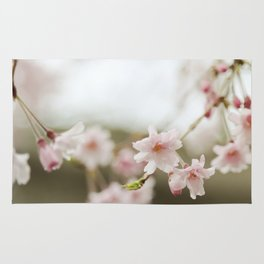 Blush Pink Cherry Blossoms on Brown Rug
